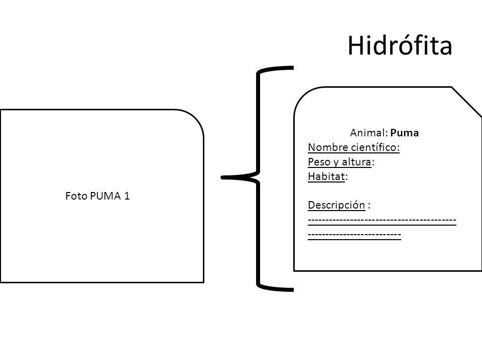 Hidrófita Animal: Puma Nombre científico: Peso y altura: Habitat: Descripción : ----------------------------------------- -------------------------- Foto PUMA 1