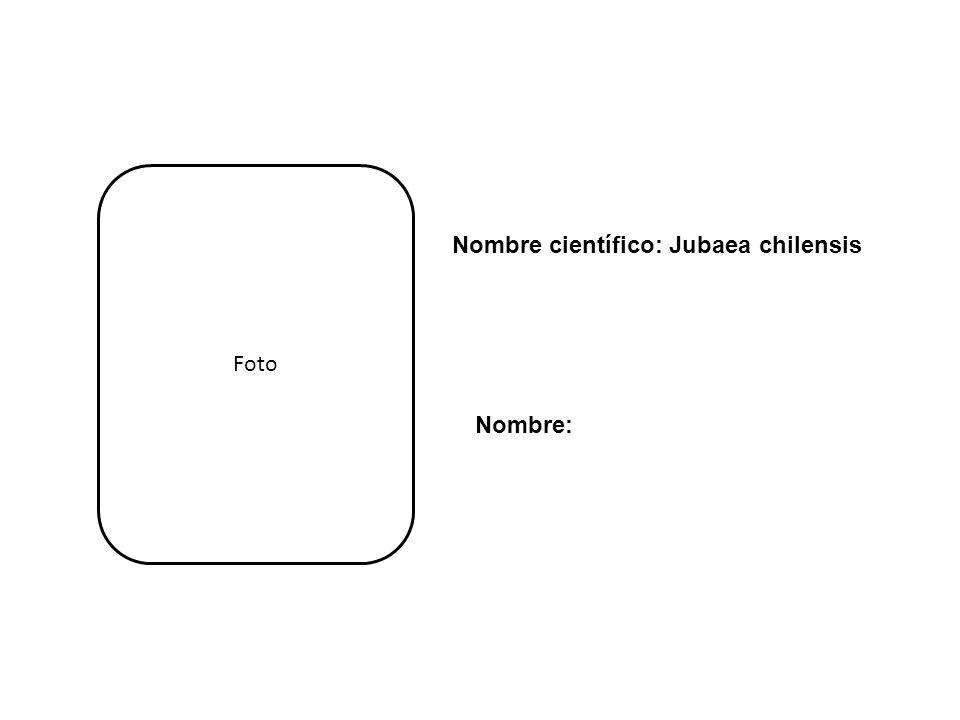 Nombre: Nombre científico: Jubaea chilensis Foto