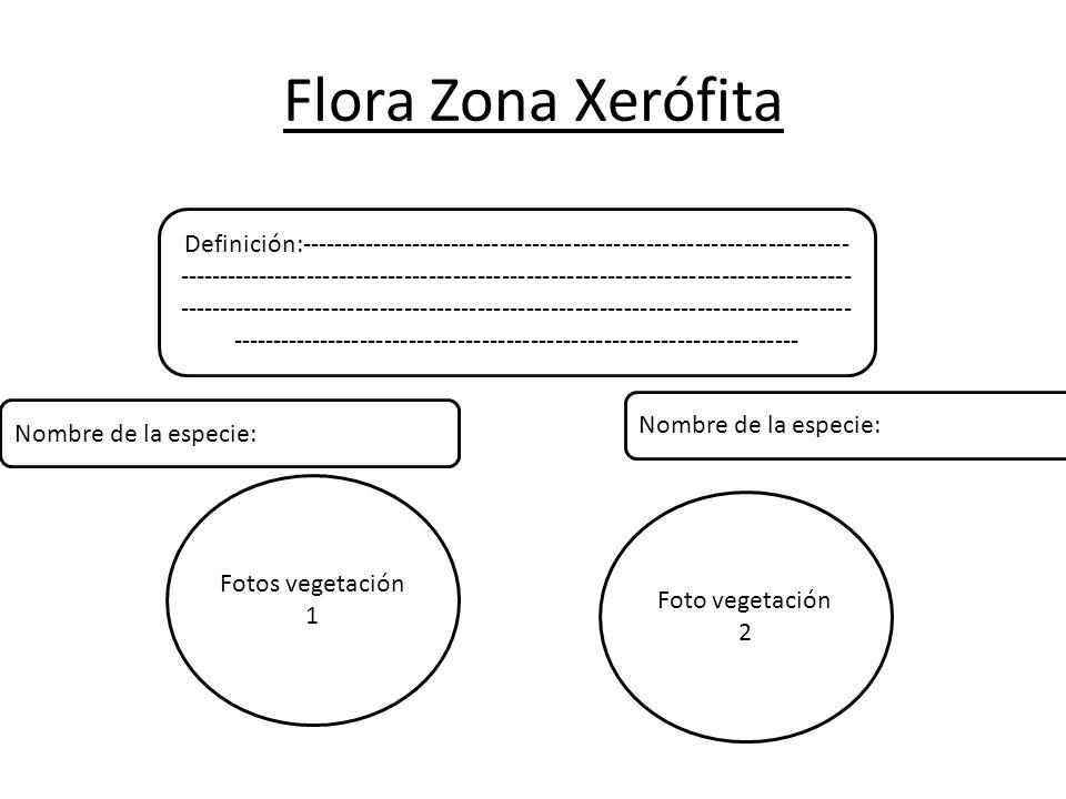 Flora Zona Xerófita Definición:-------------------------------------------------------------------- ----------------------------------------------------------------------------------- ----------------------------------------------------------------------------------- ---------------------------------------------------------------------- Fotos vegetación 1 Foto vegetación 2 Nombre de la especie: