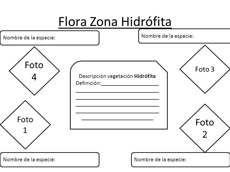 Flora Zona Hidrófita Descripción vegetación Hidrófita Definición:____________________ _____________________________ _____________________________ _____________________________ _____________________________ _________________________ Foto 1 Foto 2 Foto 3 Foto 4 Nombre de la especie: