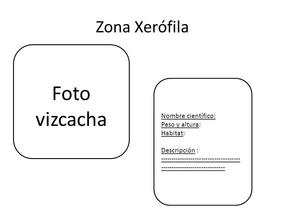 Zona Xerófila Foto Vicuña Nombre: Vicuña Nombre científico: Peso y altura: Habitat: Descripción : ----------------------------- ----------------------------- ---------