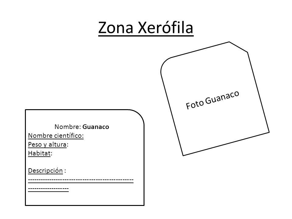 Zona Xerófila Foto Guanaco Nombre: Guanaco Nombre científico: Peso y altura: Habitat: Descripción : ------------------------------------------------ -------------------