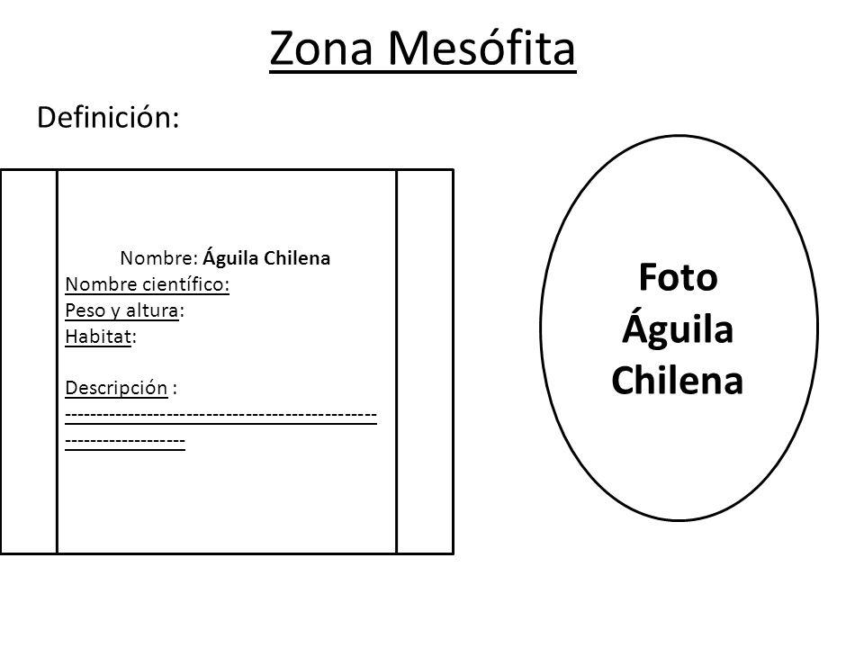 Zona Mesófita Definición: Nombre: Águila Chilena Nombre científico: Peso y altura: Habitat: Descripción : ------------------------------------------------ ------------------- Foto Águila Chilena