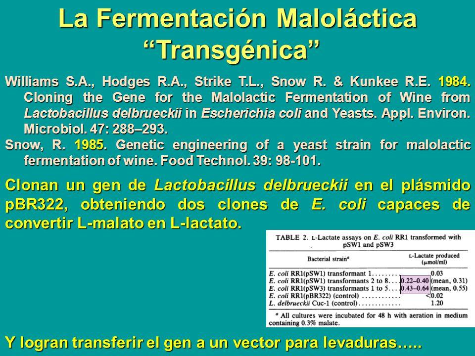 La Fermentación Maloláctica Transgénica Williams S.A., Hodges R.A., Strike T.L., Snow R. & Kunkee R.E. 1984. Cloning the Gene for the Malolactic Ferme