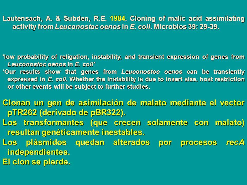 Lautensach, A. & Subden, R.E. 1984. Cloning of malic acid assimilating activity from Leuconostoc oenos in E. coli. Microbios 39: 29-39. 'low probabili