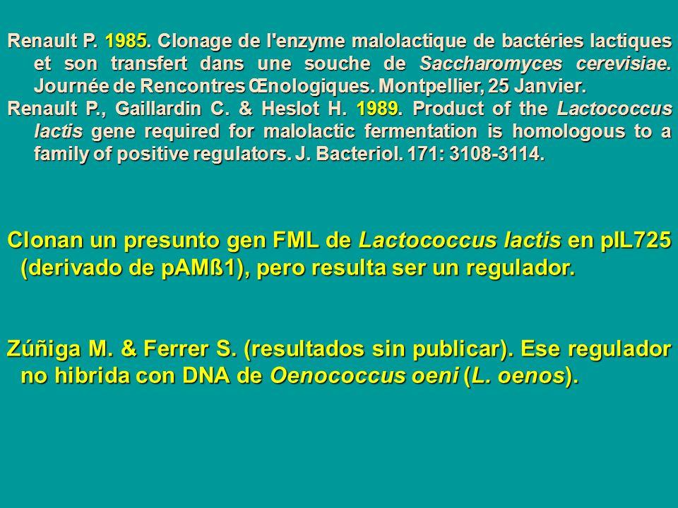 Renault P. 1985. Clonage de l'enzyme malolactique de bactéries lactiques et son transfert dans une souche de Saccharomyces cerevisiae. Journée de Renc