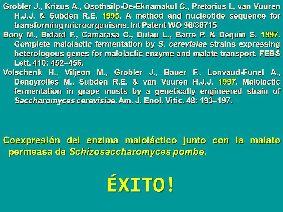 Coexpresión del enzima maloláctico junto con la malato permeasa de Schizosaccharomyces pombe. Grobler J., Krizus A., Osothsilp-De-Eknamakul C., Pretor