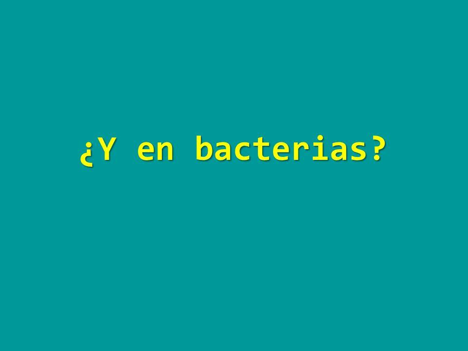 ¿Y en bacterias?