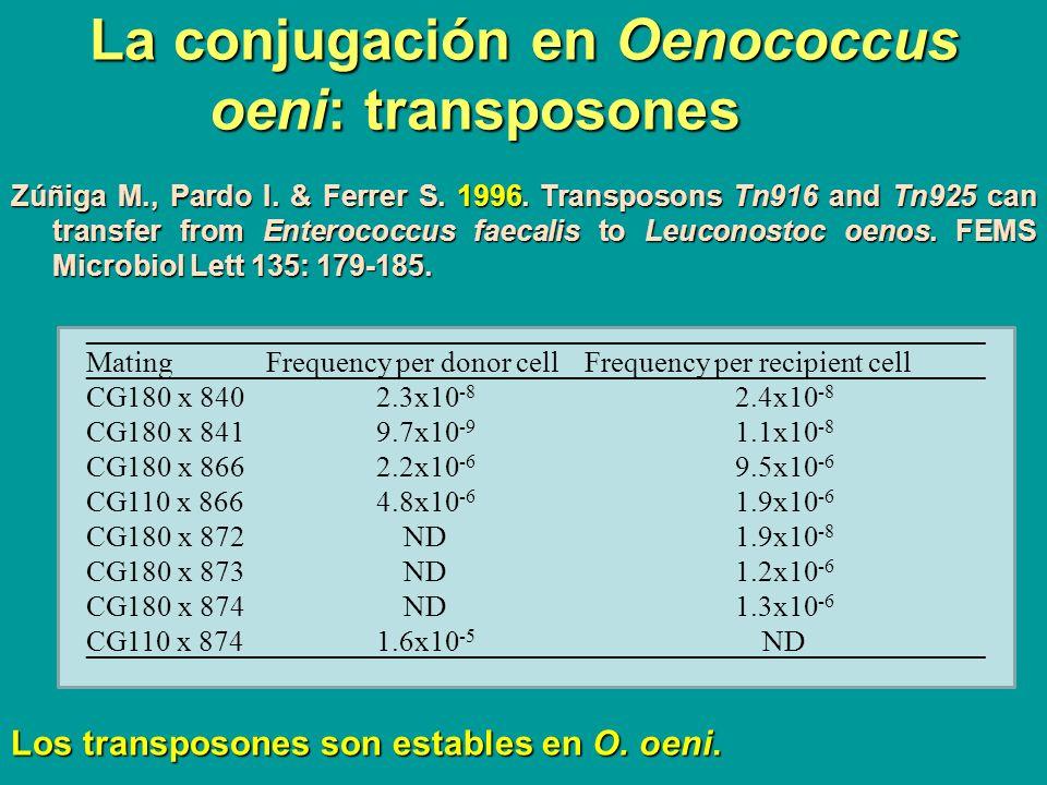 La conjugación en Oenococcus oeni: transposones Zúñiga M., Pardo I. & Ferrer S. 1996. Transposons Tn916 and Tn925 can transfer from Enterococcus faeca