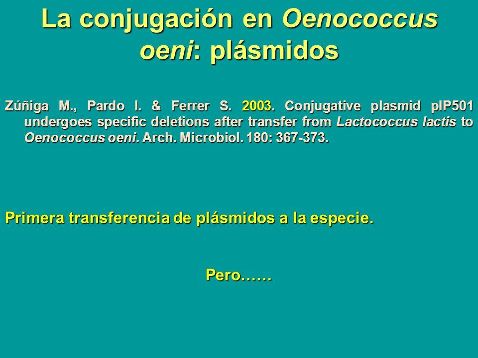 La conjugación en Oenococcus oeni: plásmidos Zúñiga M., Pardo I. & Ferrer S. 2003. Conjugative plasmid pIP501 undergoes specific deletions after trans
