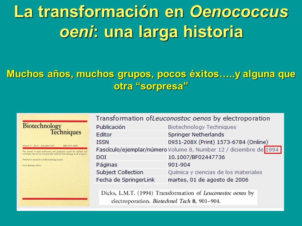 La transformación en Oenococcus oeni: una larga historia Muchos años, muchos grupos, pocos éxitos…..y alguna que otra sorpresa