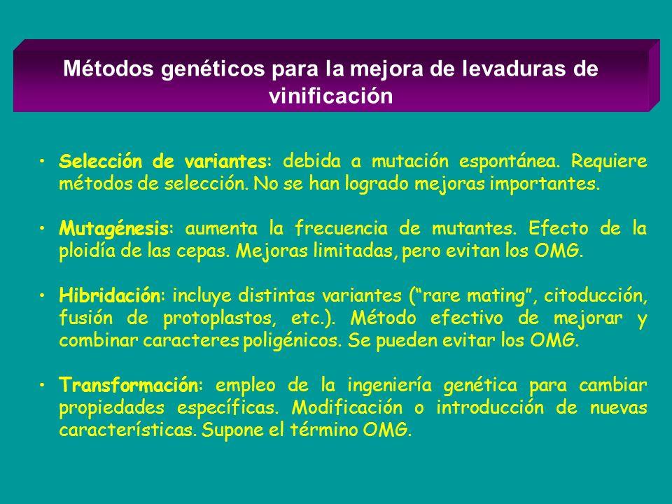 Métodos genéticos para la mejora de levaduras de vinificación Selección de variantes: debida a mutación espontánea. Requiere métodos de selección. No