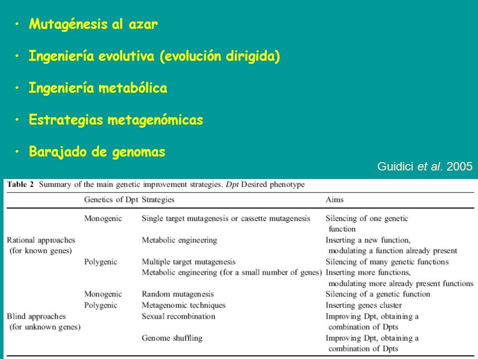 Mutagénesis al azar Ingeniería evolutiva (evolución dirigida) Ingeniería metabólica Estrategias metagenómicas Barajado de genomas Guidici et al. 2005