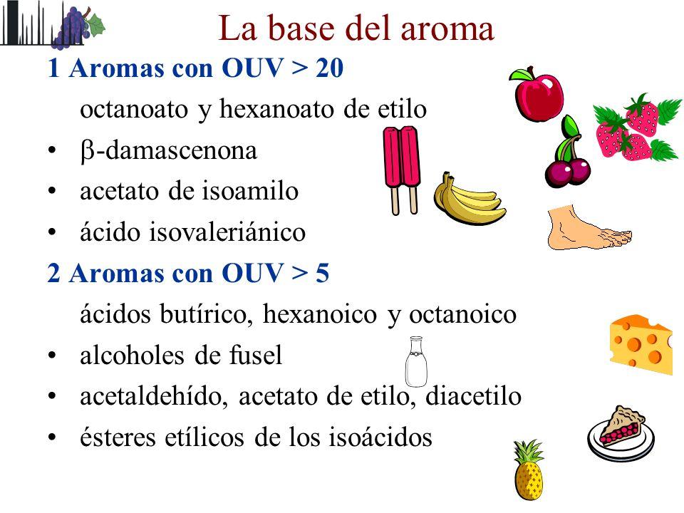 La base del aroma 1 Aromas con OUV > 20 octanoato y hexanoato de etilo -damascenona acetato de isoamilo ácido isovaleriánico 2 Aromas con OUV > 5 ácid