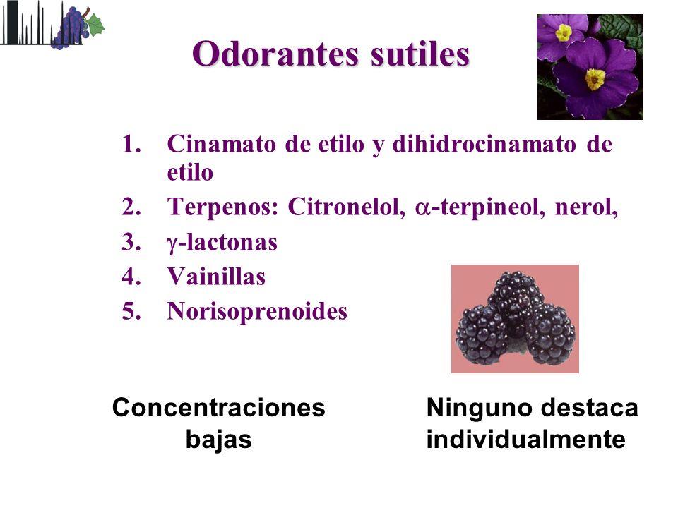 Odorantes sutiles 1.Cinamato de etilo y dihidrocinamato de etilo 2.Terpenos: Citronelol, -terpineol, nerol, 3. -lactonas 4.Vainillas 5.Norisoprenoides