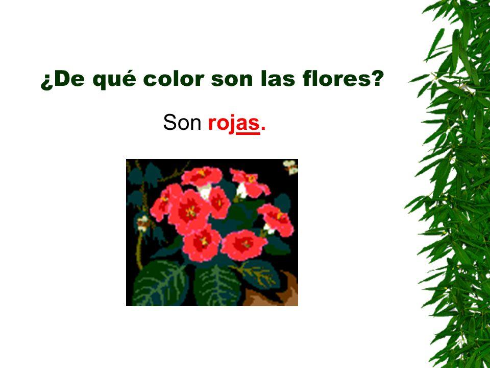 ¿De qué color son las flores? Son rojas.