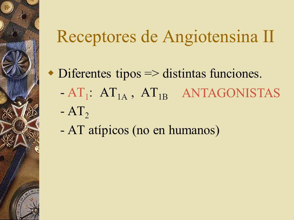 Receptores de Angiotensina II Diferentes tipos => distintas funciones. - AT 1 : AT 1A, AT 1B - AT 2 - AT atípicos (no en humanos) ANTAGONISTAS
