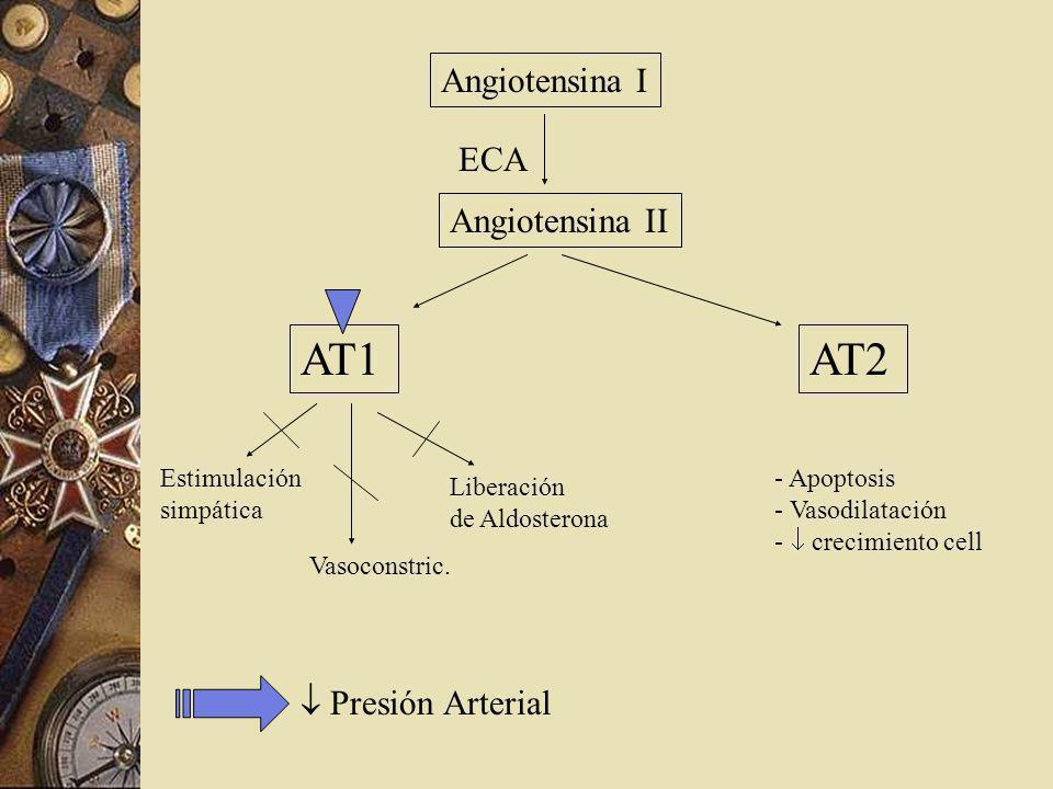 Angiotensina I Angiotensina II ECA AT1AT2 Estimulación simpática Vasoconstric. Liberación de Aldosterona - Apoptosis - Vasodilatación - crecimiento ce