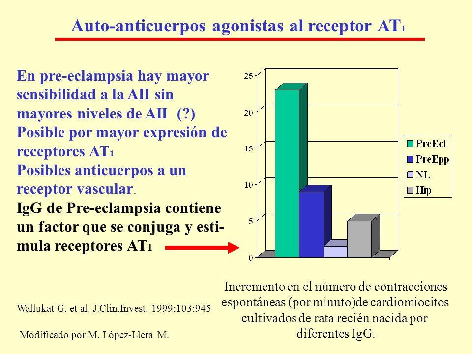 Auto-anticuerpos agonistas al receptor AT 1 En pre-eclampsia hay mayor sensibilidad a la AII sin mayores niveles de AII (?) Posible por mayor expresió