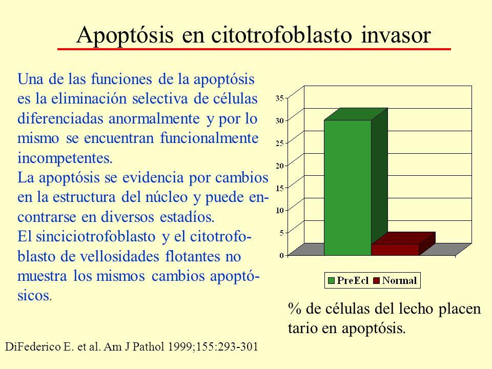 Apoptósis en citotrofoblasto invasor Una de las funciones de la apoptósis es la eliminación selectiva de células diferenciadas anormalmente y por lo m