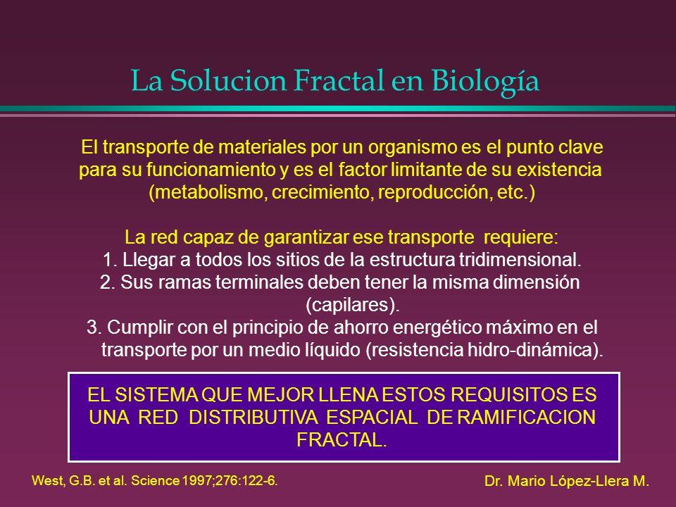 La Solucion Fractal en Biología Dr. Mario López-Llera M. El transporte de materiales por un organismo es el punto clave para su funcionamiento y es el