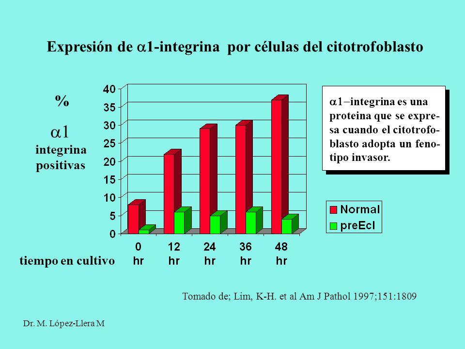% integrina positivas tiempo en cultivo Tomado de; Lim, K-H. et al Am J Pathol 1997;151:1809 Expresión de 1-integrina por células del citotrofoblasto