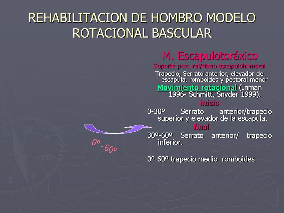 REHABILITACION DE HOMBRO MODELO ROTACIONAL BASCULAR M. Escapulotoráxico Soporte postural/ritmo escapulohumeral Trapecio, Serrato anterior, elevador de