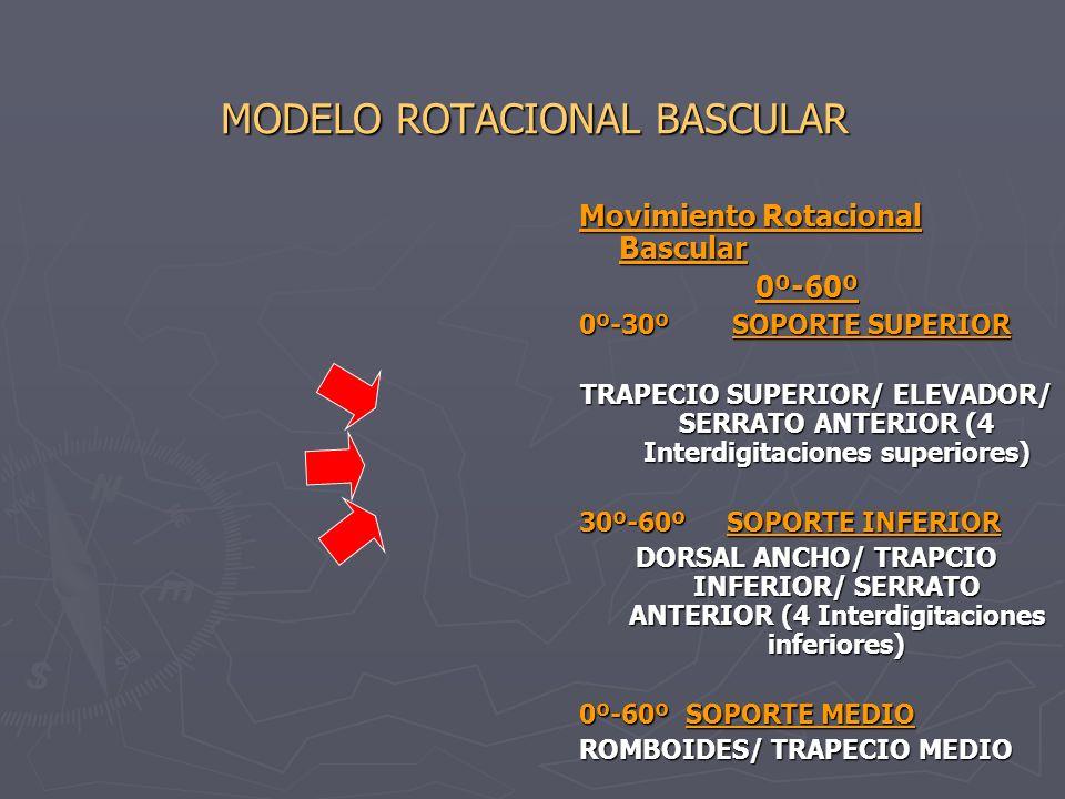 MODELO ROTACIONAL BASCULAR UNIDADES MUSCULARES UNIDADES MUSCULARES UNIDAD MUSCULAR PRIMARIA UNIDAD MUSCULAR PRIMARIAsupraespinoso/deltoides UNIDAD MUSCULAR SECUNDARIA UNIDAD MUSCULAR SECUNDARIA infraespinoso/teres menor/subescapular UNIDAD MUSCULAR TERCIARIA UNIDAD MUSCULAR TERCIARIA biceps (porcion larga)