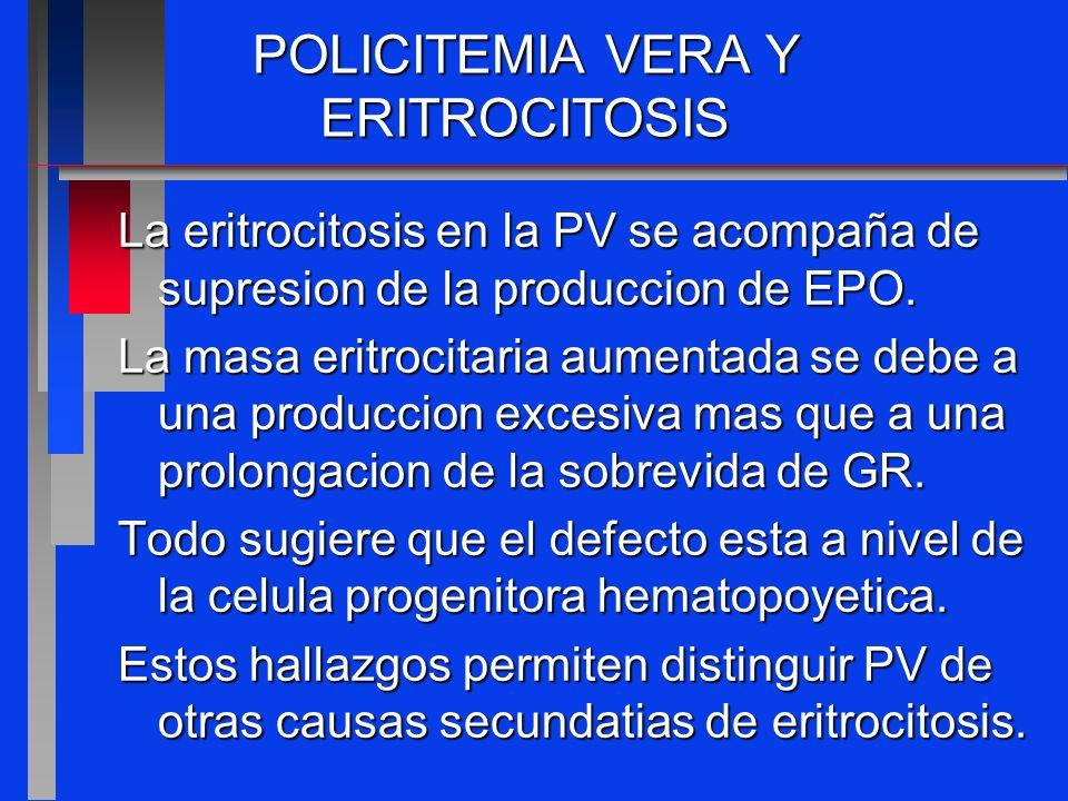 POLICITEMIA VERA Y ERITROCITOSIS La eritrocitosis en la PV se acompaña de supresion de la produccion de EPO. La masa eritrocitaria aumentada se debe a