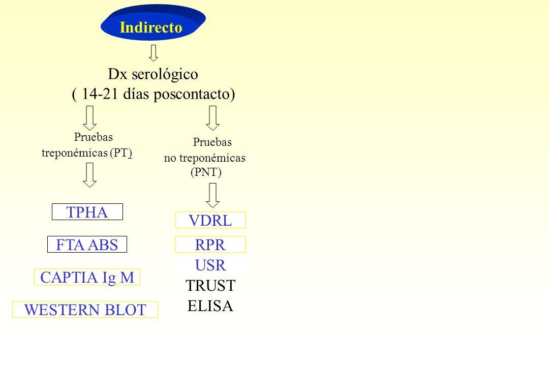 Indirecto Dx serológico ( 14-21 días poscontacto) Pruebas treponémicas (PT) Pruebas no treponémicas (PNT) TPHA FTA ABS CAPTIA Ig M WESTERN BLOT VDRL R
