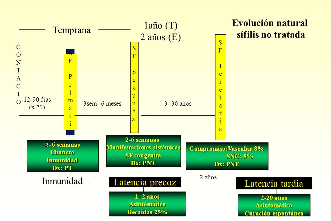 S F S e c u n d a. SFTerciariaSFTerciaria Evolución natural sífilis no tratada 1año (T) 2 años (E) Temprana CONTAGIOCONTAGIO 12-90 días (x.21) SFPrima