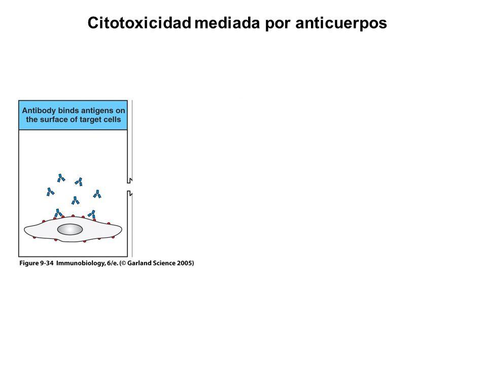 Figure 9-34 Citotoxicidad mediada por anticuerpos