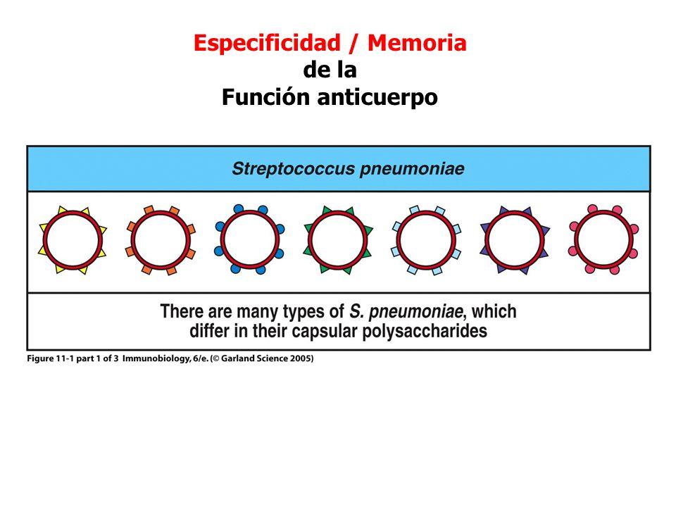 Figure 11-1 part 1 of 3 Especificidad / Memoria de la Función anticuerpo