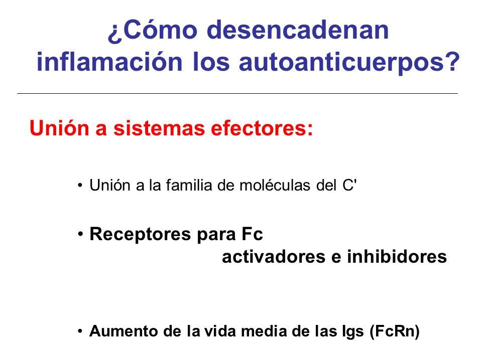 Unión a sistemas efectores: Unión a la familia de moléculas del C' Receptores para Fc activadores e inhibidores Aumento de la vida media de las Igs (F