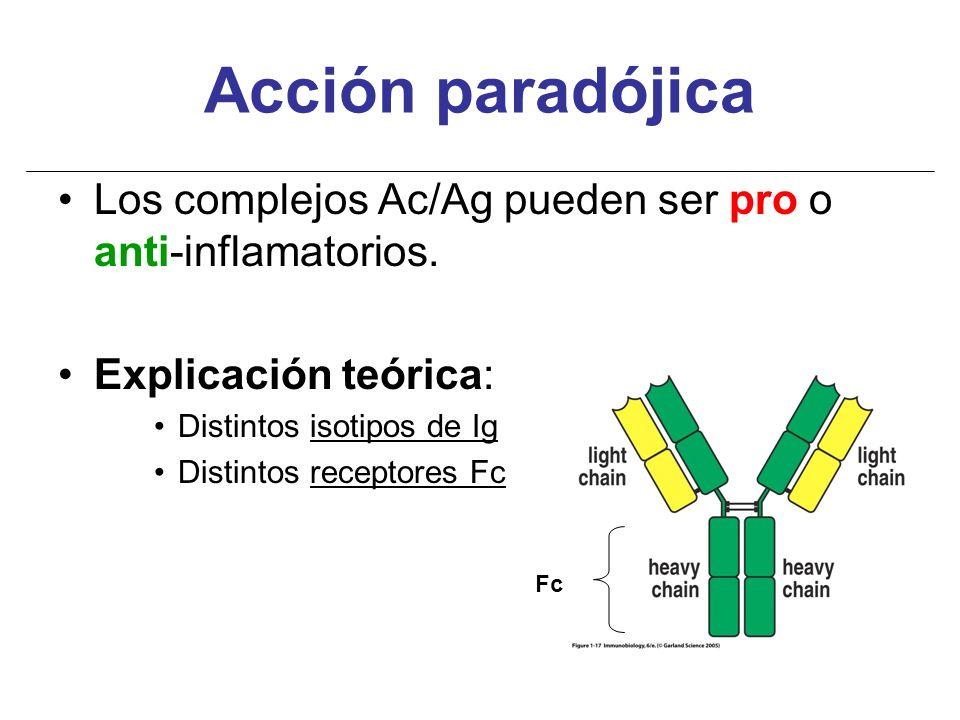 Acción paradójica Los complejos Ac/Ag pueden ser pro o anti-inflamatorios. Explicación teórica: Distintos isotipos de Ig Distintos receptores Fc Fc
