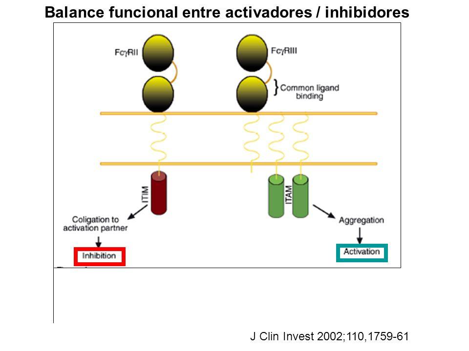 J Clin Invest 2002;110,1759-61 Balance funcional entre activadores / inhibidores