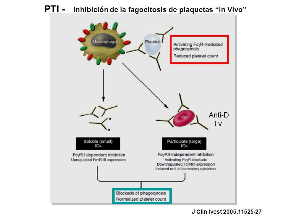 PTI - Inhibición de la fagocitosis de plaquetas in Vivo J Clin Ivest 2005,11525-27 Anti-D i.v.