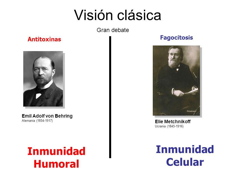 Visión clásica Emil Adolf von Behring Alemania (1854-1917) Antitoxinas Fagocitosis Inmunidad Humoral Inmunidad Celular Elie Metchnikoff Ucrania (1845-