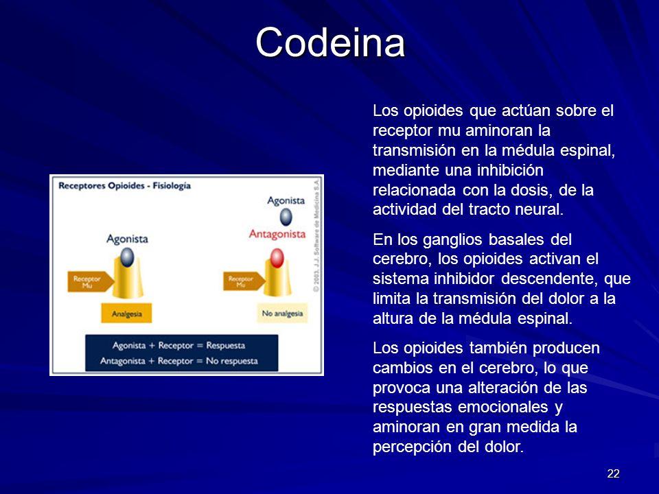 22Codeina Los opioides que actúan sobre el receptor mu aminoran la transmisión en la médula espinal, mediante una inhibición relacionada con la dosis,