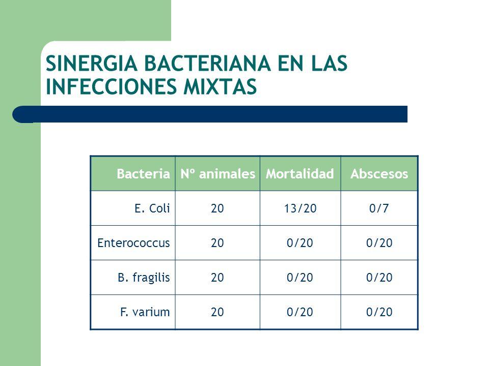 SINERGIA BACTERIANA EN LAS INFECCIONES MIXTAS BacteriaNº animalesMortalidadAbscesos E. Coli2013/200/7 Enterococcus200/20 B. fragilis200/20 F. varium20