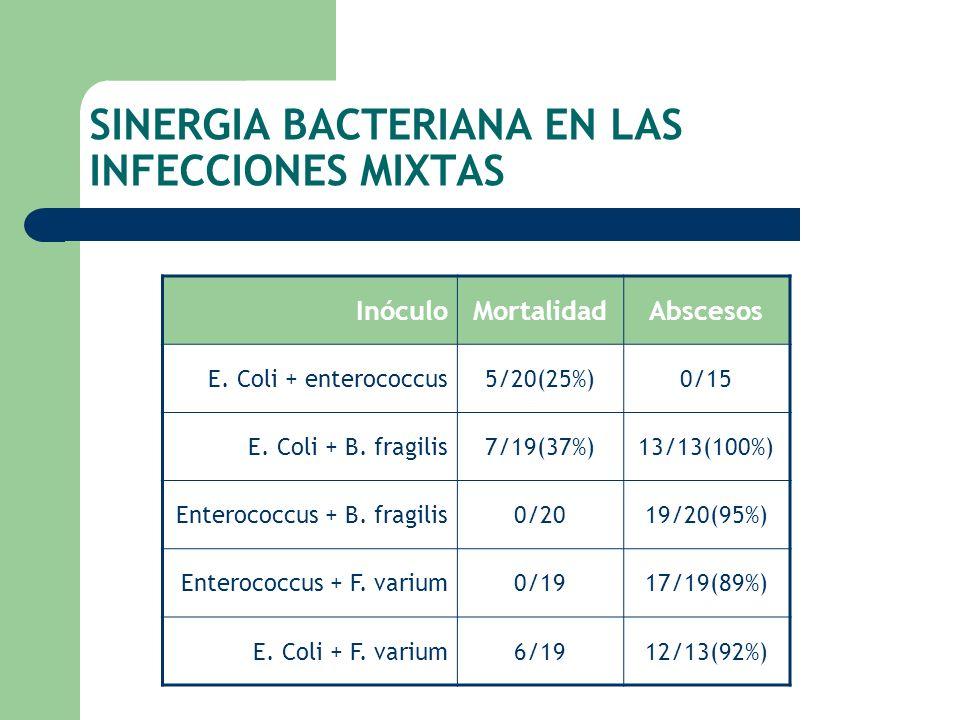 SINERGIA BACTERIANA EN LAS INFECCIONES MIXTAS InóculoMortalidadAbscesos E. Coli + enterococcus5/20(25%)0/15 E. Coli + B. fragilis7/19(37%)13/13(100%)