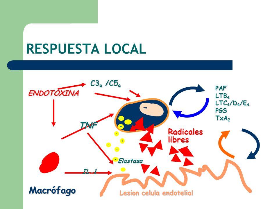 Lesion celula endotelial ENDOTOXINA Elastasa Radicales libres TNF IL-1 PAF LTB 4 LTC 4 /D 4 /E 4 PGS TxA 2 Macrófago C3 a /C5 a RESPUESTA LOCAL