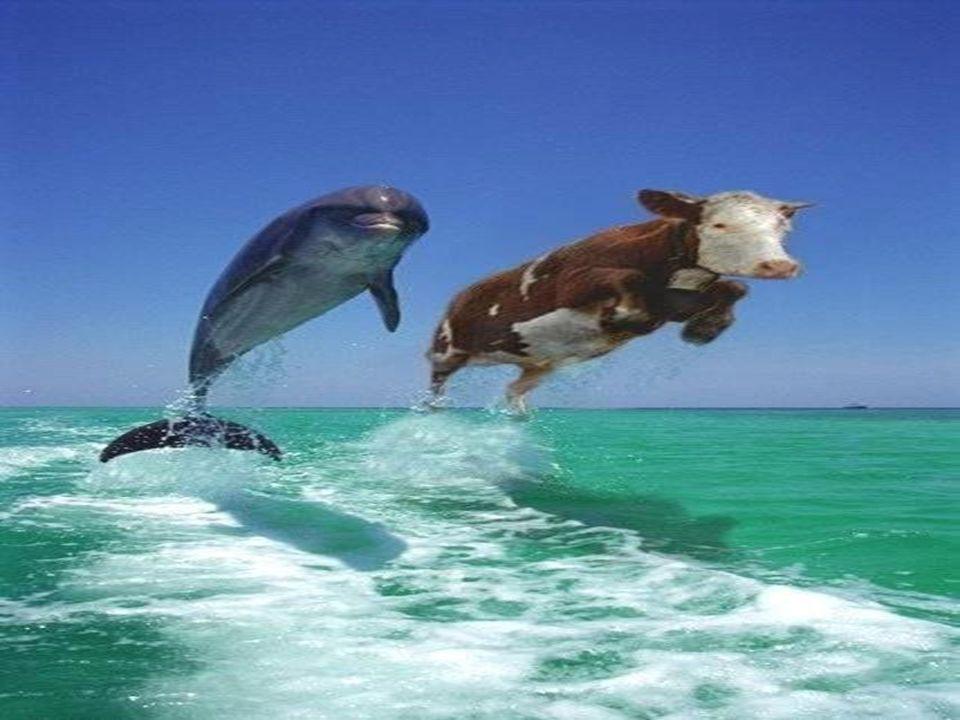 Los delfines: ¿son idénticos, son iguales, son equivalentes, son intercambiables.