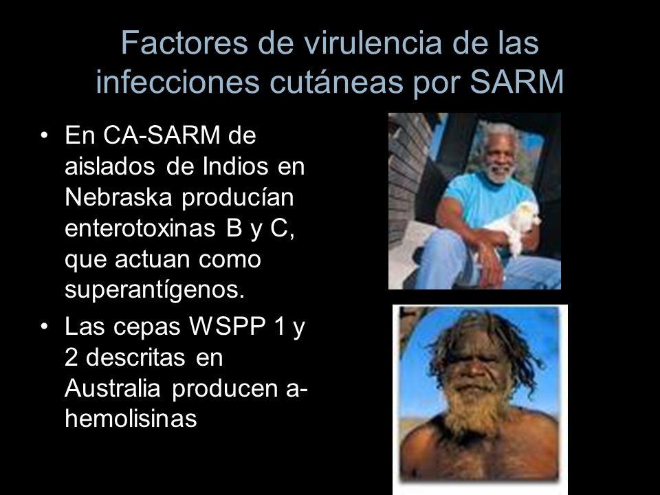 Factores de virulencia de las infecciones cutáneas por SARM En CA-SARM de aislados de Indios en Nebraska producían enterotoxinas B y C, que actuan com