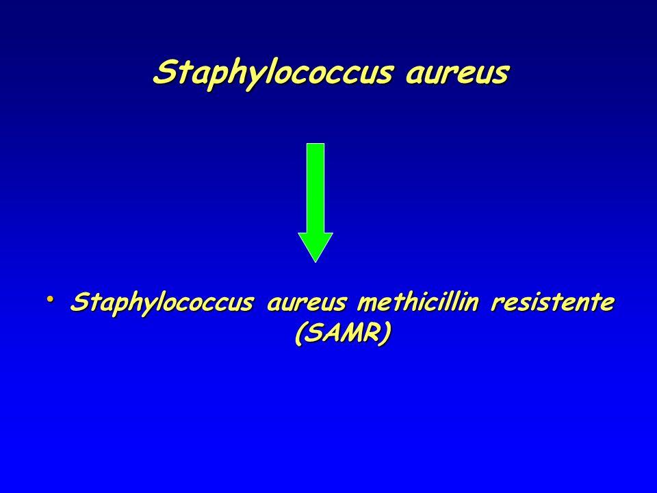 Staphylococcus aureus Staphylococcus aureus methicillin resistente (SAMR) Staphylococcus aureus methicillin resistente (SAMR)