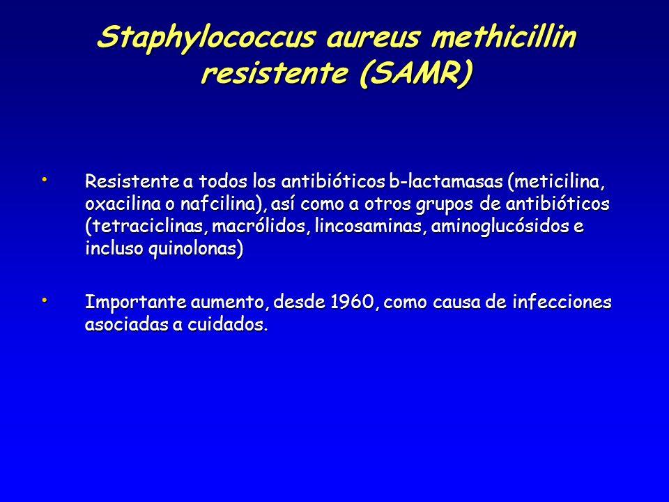 Staphylococcus aureus methicillin resistente (SAMR) Resistente a todos los antibióticos b-lactamasas (meticilina, oxacilina o nafcilina), así como a o