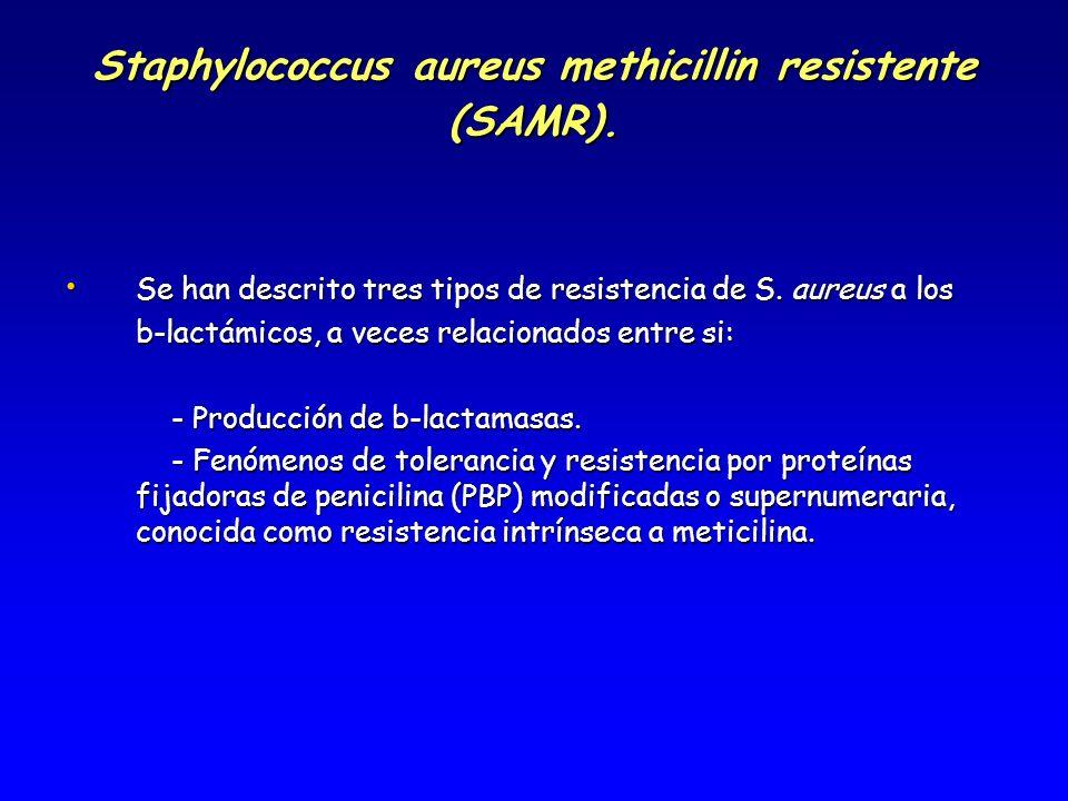 Staphylococcus aureus methicillin resistente (SAMR). Se han descrito tres tipos de resistencia de S. aureus a los Se han descrito tres tipos de resist