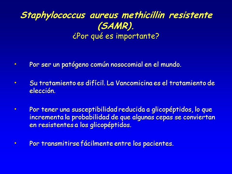 Staphylococcus aureus methicillin resistente (SAMR). ¿Por qué es importante? Por ser un patógeno común nosocomial en el mundo. Por ser un patógeno com