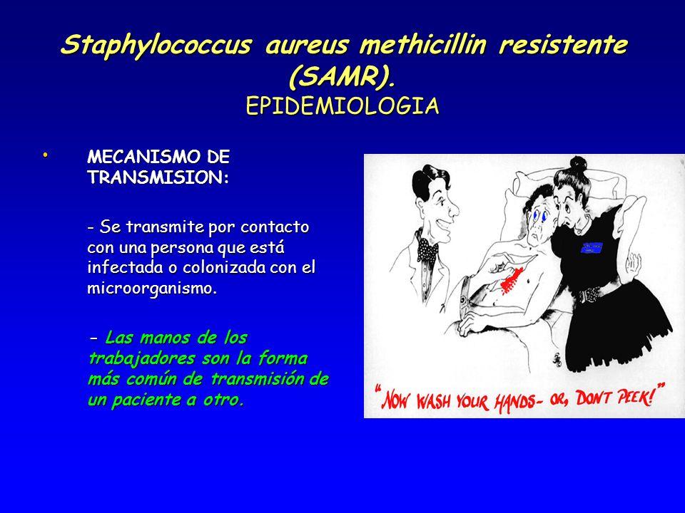 Staphylococcus aureus methicillin resistente (SAMR). EPIDEMIOLOGIA MECANISMO DE TRANSMISION: MECANISMO DE TRANSMISION: - Se transmite por contacto con