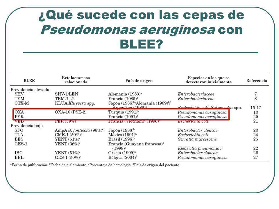¿Qué sucede con las cepas de Pseudomonas aeruginosa con BLEE?